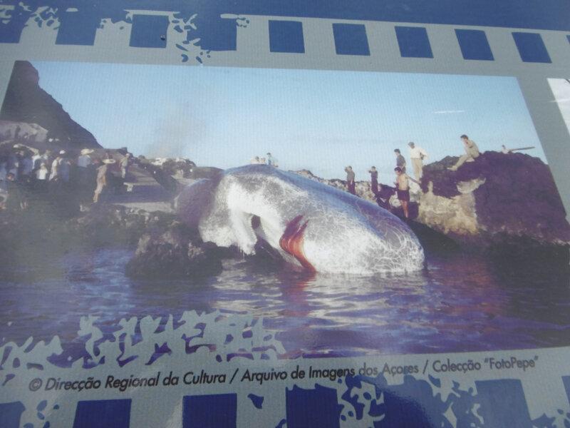 34 - découpe baleine