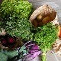 Premier panier de légumes bio mais qu'est ce que c'est?