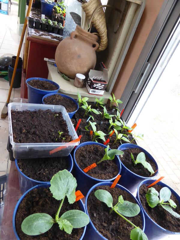 3-semis-nursery (2)