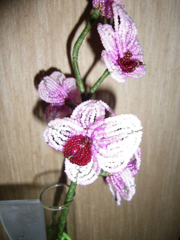 Orchidee Les Passions D Ema