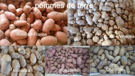 20-pommes de terre 2