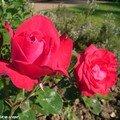 Au parc Floral de la Source à Orléans