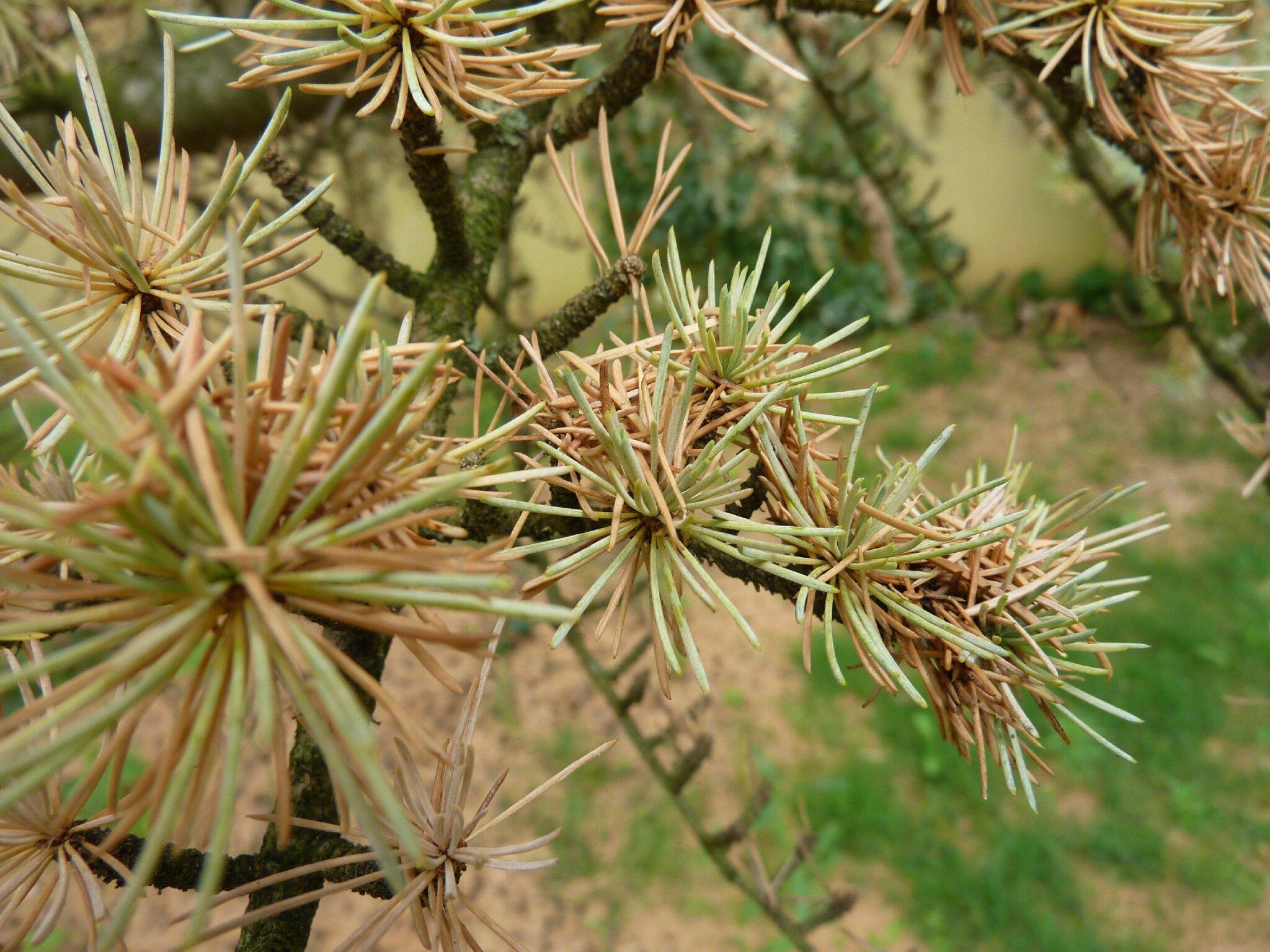 redoutable champignon - le jardin par passion