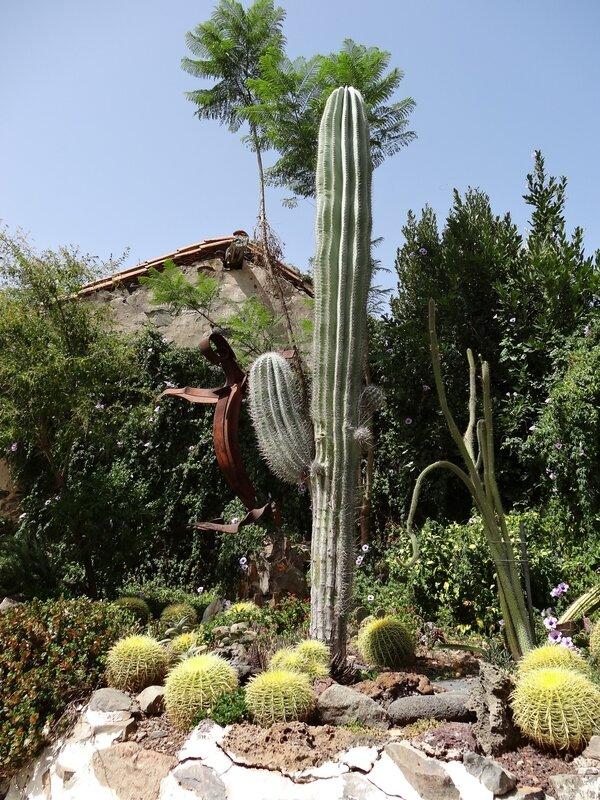 Les cactus de Fataga