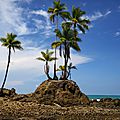 palm island costa rica