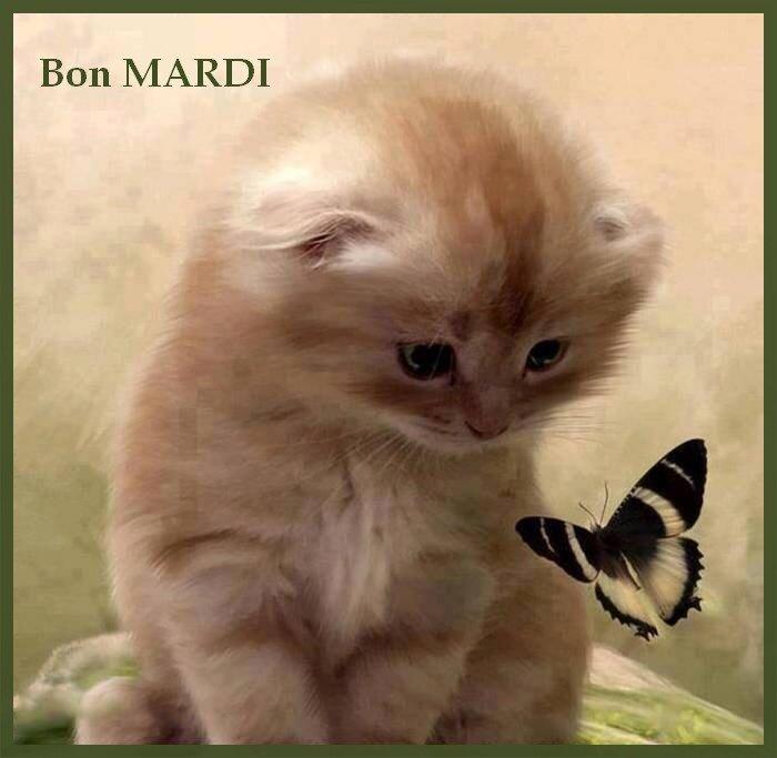 MARDI__1_