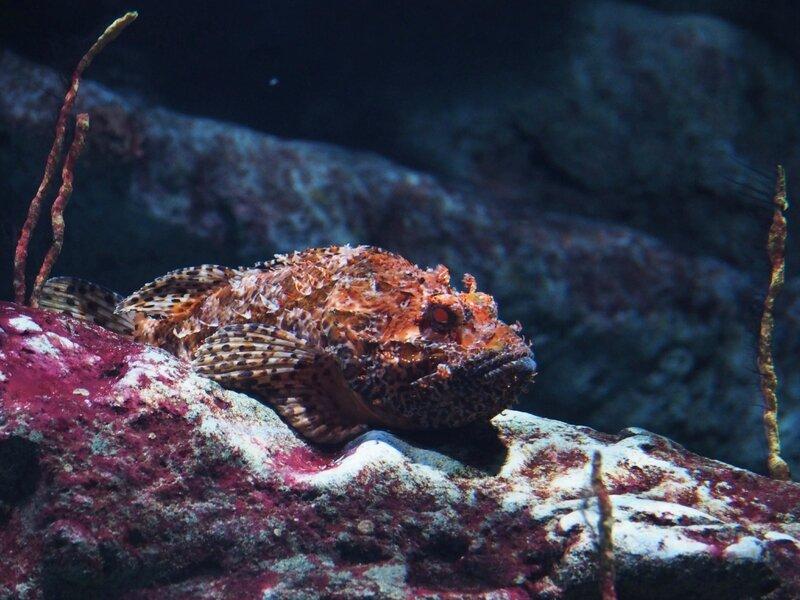 2-aquarium-odysseum-mare-nostrum-montpellier-ma-rue-bric-a-brac