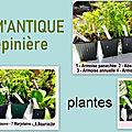 Un grand merci à mon partenaire arom'antique bio pépinière plantes aromatiques