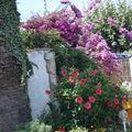 Belle végétation méditerranéene