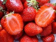fraises_le_barcares_france_795862079_947869