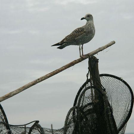 blog l'oiseau