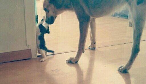 Snoop et le chaton