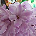 ♥ des fleurs pour une douce journée ♥