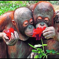 fleurs singes