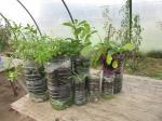 Nouveaux plants de chez Emmanuel Rolland !