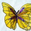 2010_090101-09-10-papillons0033