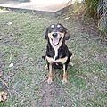 NAYLA 1 - gentille chienne et son unique chiot survivant