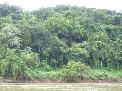 Sailing on the Usumacinta River to Yaxchilan - Jungle