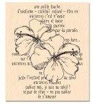 RDV_au_soleilt_-_hibiscus_storyred_s