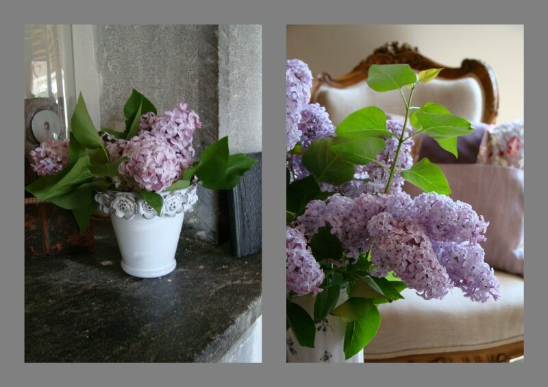 bouquets de lilas