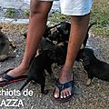 Plazza 2 chienne et ses chiots sur une plage