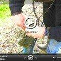 Une vidéo d'une partie d'une greffe