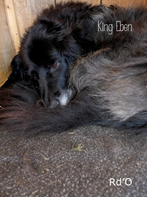 animaux-home-blog-04