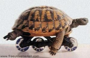 tortue_pour_slow_food2