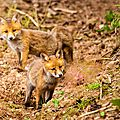 2014-05-30 LUX-1074