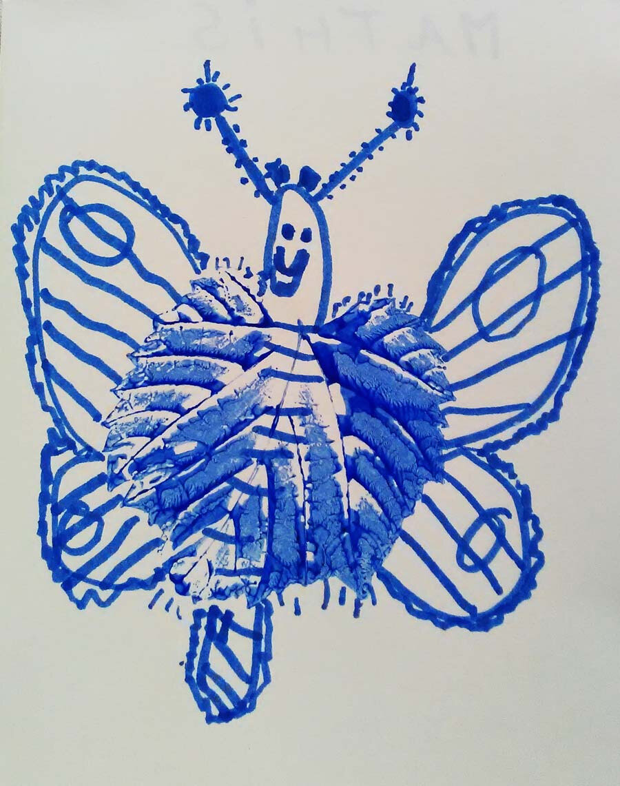 CassioInsect13