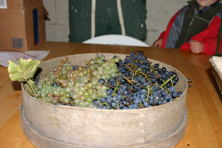les_vendanges___la_chapelle_5_octobre_2008_077