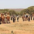 marché au bétail à Yabelo