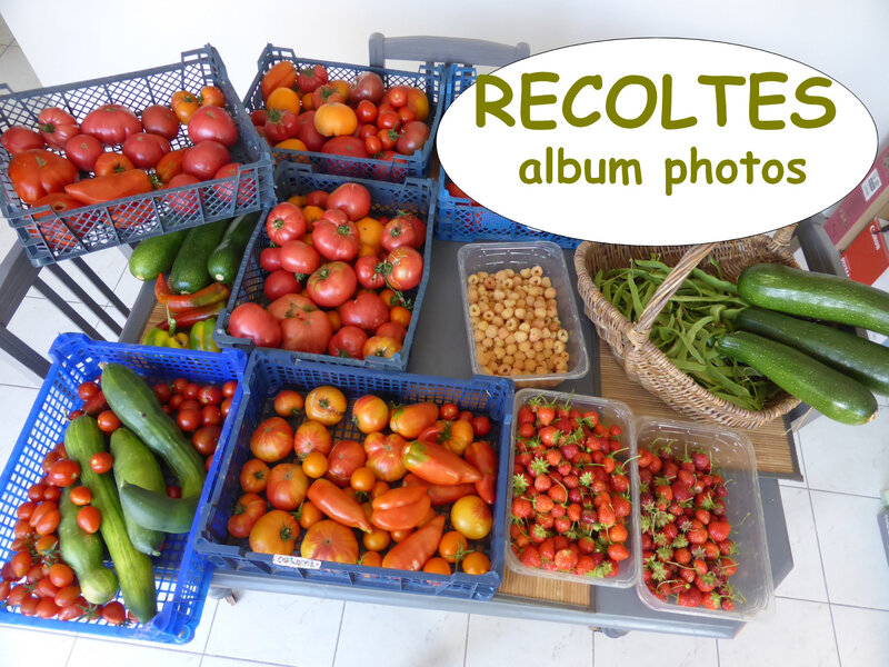 récoltes - album photos