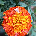 F orange 1
