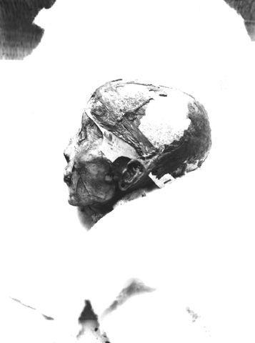 tête profil