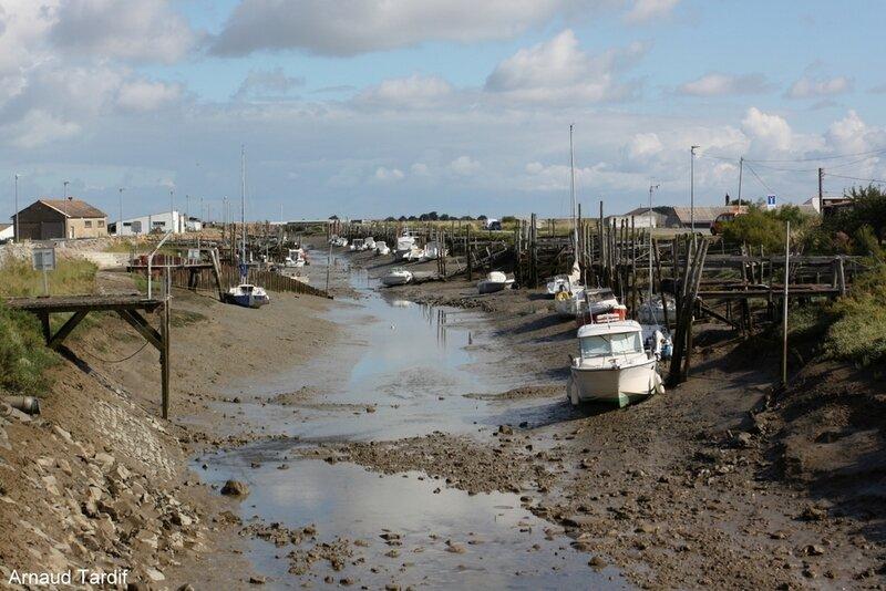 001987 Noirmoutier Juin 2020 - Les Marais Bretons Vendéens - Le Port du Pont Neuf et le Canal de la Taillée à la sortie de N-D- de Monts - D22