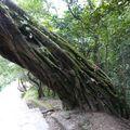 2009-10-06 Sankhu - Temple Vajrayogini (4)