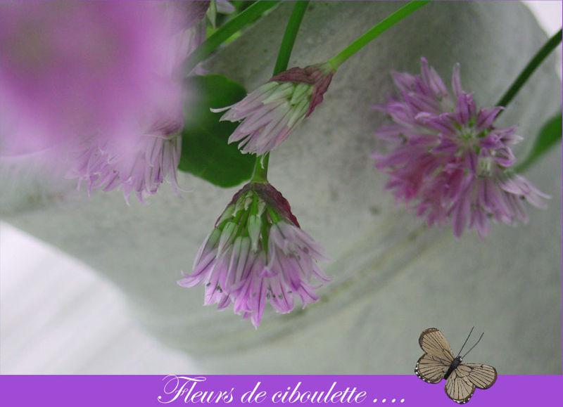fleurs_2_copie