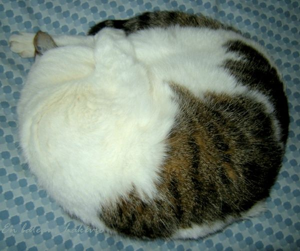 chat Mousse hiver