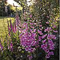 Windows-Live-Writer/jardin_6BD4/DSCF3623_thumb