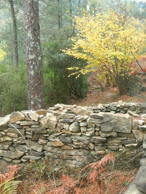 noisetier d'automne sur ruine yurtao