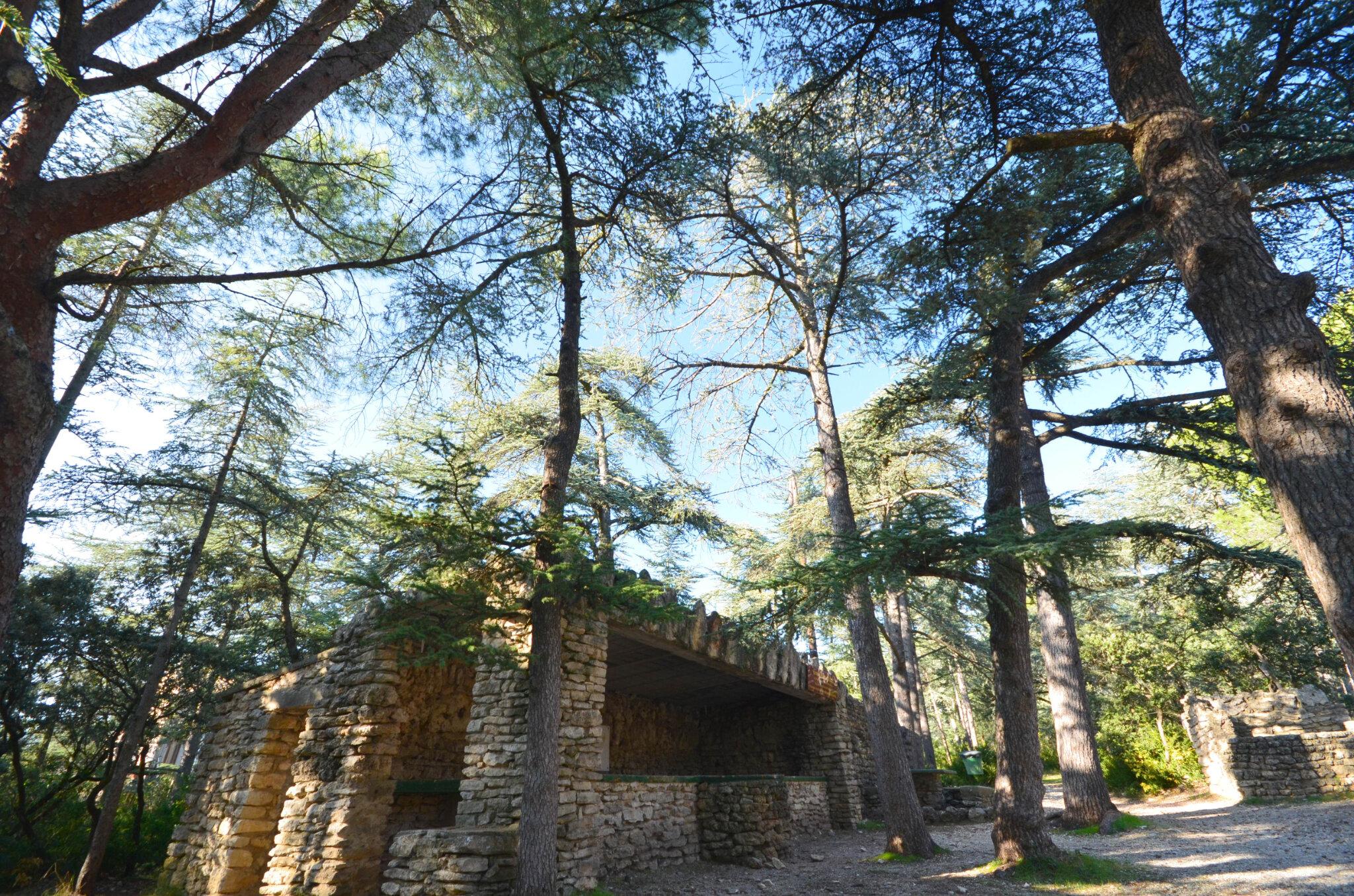 Cabrières d'Avignon et sa forêt de Cèdres