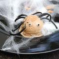 Nomades : araignées dans leur barbatoile