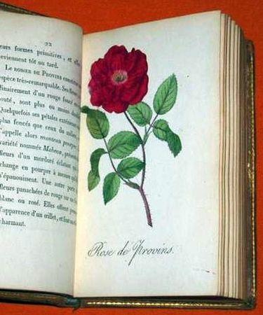 1815_ROSES_Etrennes_aux_Dames_6