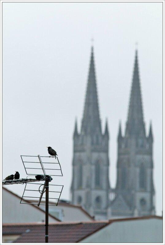 ville etourneaux antenne clochers 170416 3_1