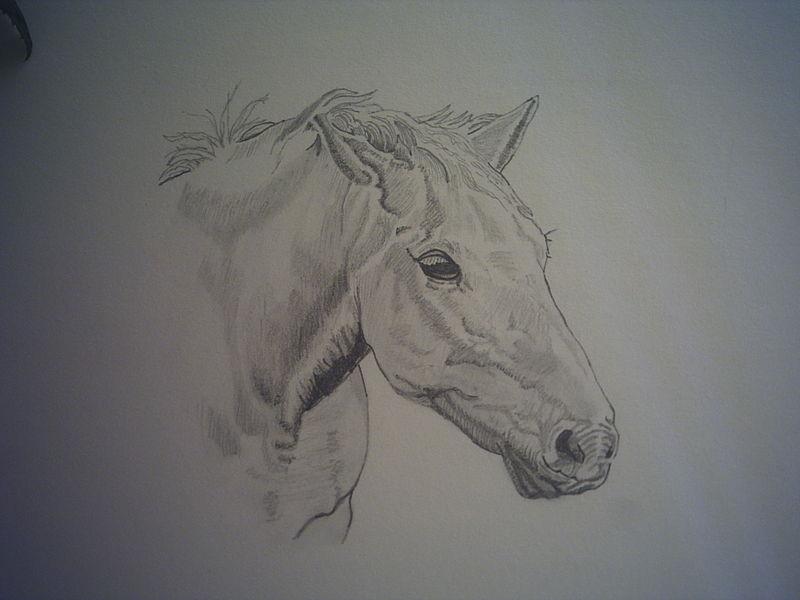 T te de cheval artiste dessinateur noir et blanc - Cheval a imprimer noir et blanc ...