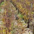 Brocard dans les vignes