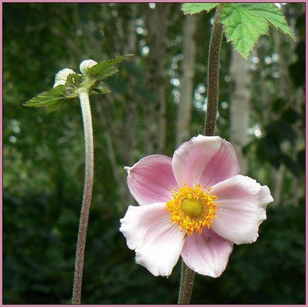 fleurose