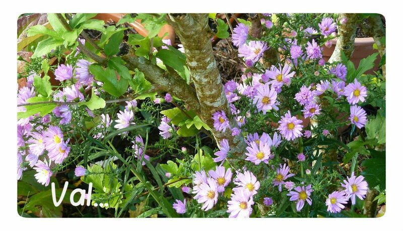 asters0210