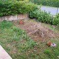 Mon jardin autofertile photos par étape!